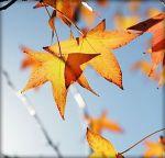 Horaires automne-hiver au CRRL